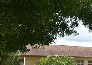 11613 Anhinga Drive 3 Beds House for Rent Photo Gallery 1