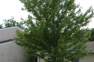 5204 BAHIA DR 3 Beds House for Rent Photo Gallery 1