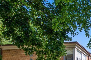 2103-23 W. Berwyn Ave 1-3 Beds Apartment for Rent Photo Gallery 1