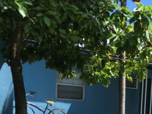 1015 Palm Avenue Studio Apartment for Rent Photo Gallery 1
