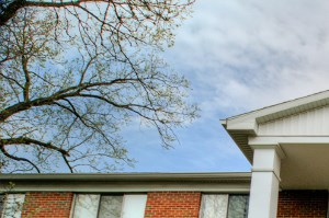 3009 Woodruff Ave. 2 Beds Apartment for Rent Photo Gallery 1