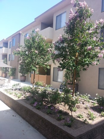500 S. Los Robles Avenue 1-2 Beds Apartment for Rent Photo Gallery 1