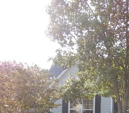 11 Hookston Ct, Irmo SC 3 Beds House for Rent Photo Gallery 1