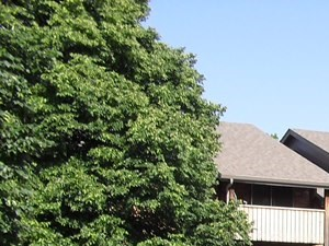 650 Waterford Drive 1-2 Beds Apartment for Rent Photo Gallery 1
