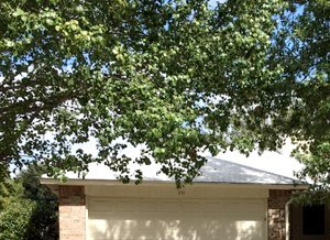 231 MYRTLE DRIVE 3 Beds House for Rent Photo Gallery 1
