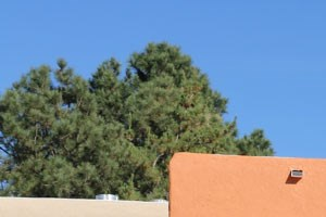 5100 Mesa Del Oso Rd NE 2 Beds Apartment for Rent Photo Gallery 1