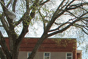 6435-43 N. Damen Ave. 1-3 Beds Apartment for Rent Photo Gallery 1